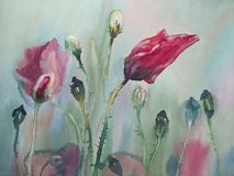 Poopies in the wind. Watercolor flowers poppies field in the sun Stock Photography