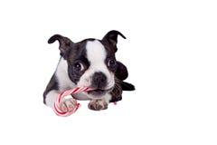 Poopsie que come el bastón de caramelo Imagen de archivo libre de regalías