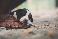 A cute puppy sleeping on a man`s foot. A poor abandoned puppy finds a human companion and finally gets peace and sleep on his feet ..candid photography royalty free stock image