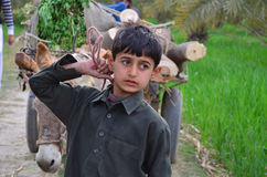 Poor boy with donkey cart! Royalty Free Stock Image