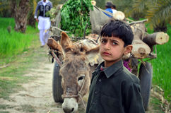 Poor boy with donkey cart! Stock Image
