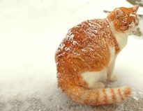 The poor cat snows a lot over it.  stock photography