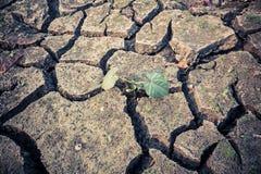 Poor children in the arid area. A lone poor children in the arid area Stock Images