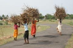 Poor children carrying brushwood Stock Photo