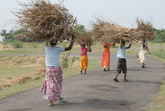 Poor children carrying brushwood Stock Images