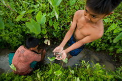 Poor children catch small fish in a ditch Royalty Free Stock Images
