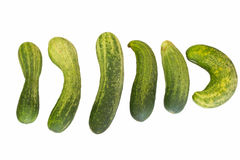 Poor cucumber Stock Photo