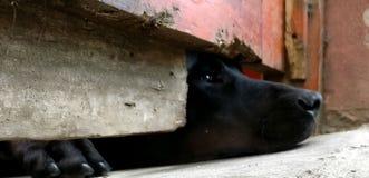 Poor dog stock image
