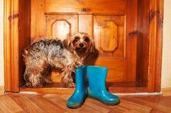 Poor dog near door stock photo