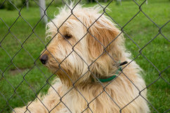 Poor dog in the shelter Royalty Free Stock Photo