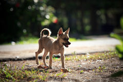 Poor dog standing on soil ground Stock Photos
