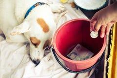 Poor dog waiting people give money on box. stock photo