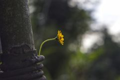 Poor flower. I found on the garden fence stock photo