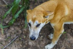 Poor homeless dog looking. At you Royalty Free Stock Images