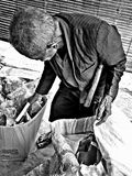Poor homeless man looking for garbage. Oldman, homelessman, street, streetlife, hardlife royalty free stock photo