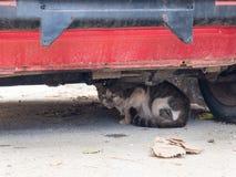 Stray cat hidding under the car, Sucuraj on Hvar island, Croatia royalty free stock photos