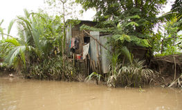 Poor hut in the jungle of Mekong Delta Stock Image