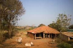 Poor Indian household farm. Andhra Pradesh, Anantapur. Poor Indian household farm. House and cows in yard. Andhra Pradesh, Anantapur Royalty Free Stock Photos