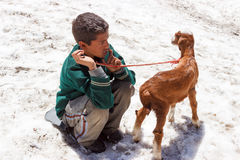 Poor Indian kid, Kashmir native. A child sitting on the snow with a small goat. Life in the mountains is very hard and sources of income are limited in Jammu and Stock Photo