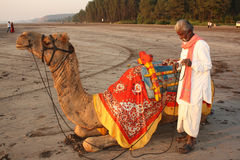 Camel Business. A poor Indian man with his camel waiting for customers for his camel ride on a beach, on an evening Royalty Free Stock Images