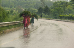 Poor. Indian Rural woman returning in outing rain after collecting fodder for their cattle stock photo