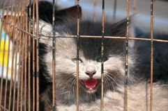 A Poor Kitty in a Rusty Cage Stock Photography