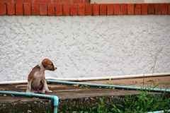 Poor little dog in temple is waiting for someone. Alone royalty free stock photography