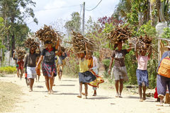 Poor malagasy people carrying branches on heads - poverty. ANTSIRABE, MADAGASCAR, SEPTEMBER 2014, Unknown malagasy people carrying branches on heads - poverty Stock Image