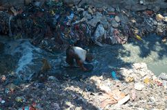 Poor man is digging in the garbage dump Royalty Free Stock Image
