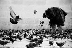 Poor man in Paris feeding pigeons stock photo