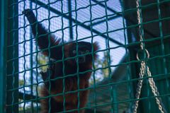 Poor monkey in a cage. Turned around royalty free stock photos