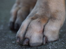 Poor Paws Royalty Free Stock Photos