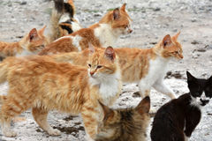 Poor stray cats. Group of little tabby stray kitten in the street of a village at Karpasia peninsula in northern Cyprus Royalty Free Stock Photo