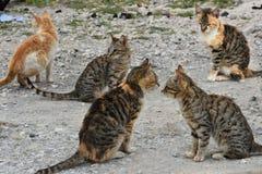 Poor stray kitten Royalty Free Stock Photos