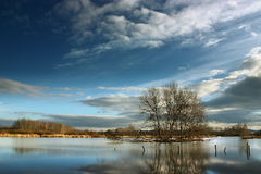 Poor trees. Trees on the small island at the water under the blue sky with white clouds Royalty Free Stock Images