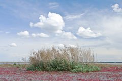 Poor vegetation on the dried up lake Royalty Free Stock Image