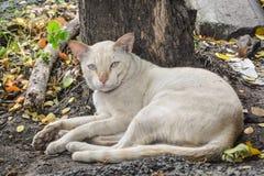 Poor white cat Royalty Free Stock Photo