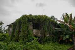 Poor wooden House overgrown with green plants, city Bintulu, Borneo, Sarawak, Malaysia. Poor wooden House overgrown with green plants city Bintulu, Borneo stock photos