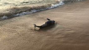 Poor young dolphin laying dead on the beach, indian seaside, ecological catastrophe, nature disaster, animal die