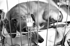 Poorly Dog. In the cage Royalty Free Stock Photos