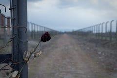 Poort aan concentratiekampauschwitz-birkenau Prikkeldraadomheining rond het doodskamp in Oswiecim stock afbeeldingen