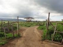 Poort aan Maasai-dorp dichtbij Suswa, Kenia Stock Foto's