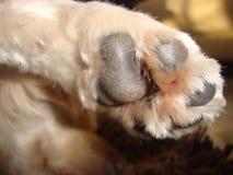 Poot en voetafdruk van een poedelpuppy royalty-vrije stock afbeelding