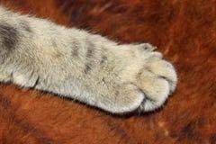 Poot van kat op de stof stock afbeelding
