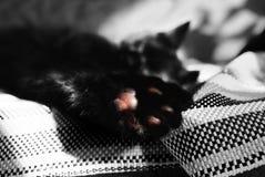Poot van zwarte katten dichte omhooggaand in het centrum van de foto, slechts één kleurendetail op een zwart-witte foto royalty-vrije stock foto's
