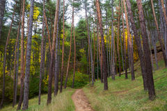 Pootpath in Pinar Stock Photography