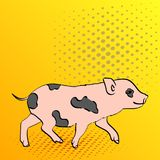 Pop Art Background Pig Pet Mini Pig. Vector of a vintage, retro style comic strip. Pop Art Background Pig Pet Mini Pig. Vector illustration of a vintage, retro Royalty Free Stock Image