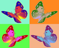 Pop art colias butterfly. Fantasy pop art colias butterfly Royalty Free Stock Photography