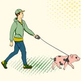 Pop art man walking a mini pig. Vector of an imitation comic style, retro. Pop art man walking a mini pig. Vector illustration of an imitation comic style Royalty Free Stock Images