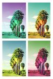 Pop art palm trees Royalty Free Stock Photo